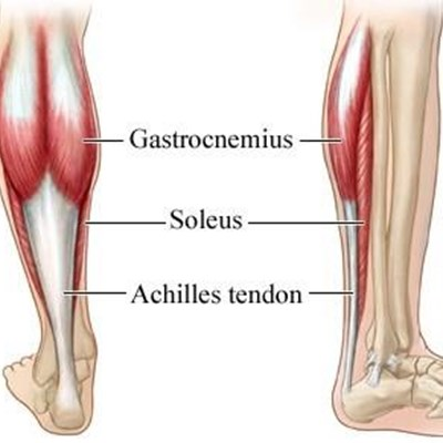 Achilles Tendon Anatomy