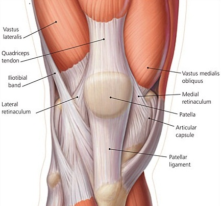 Lateral Knee Anatomy
